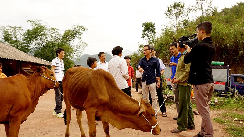 Trao tặng 10 tấn xi măng và 20 con bò giống lai sind cho bà con dân tộc vùng cao huyện Nậm Pồ, tỉnh Điện Biên